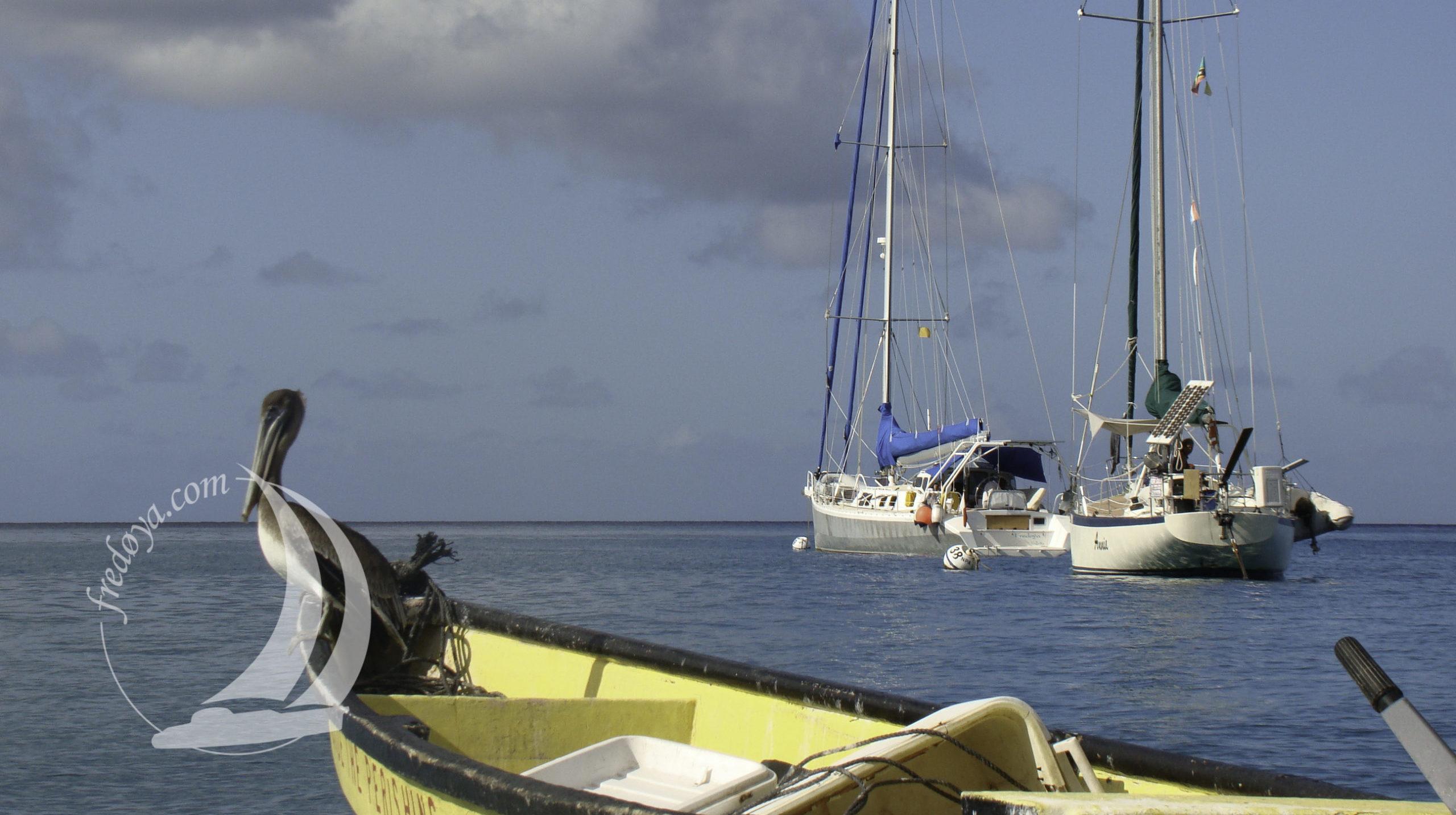 Nevis une des iles des antilles