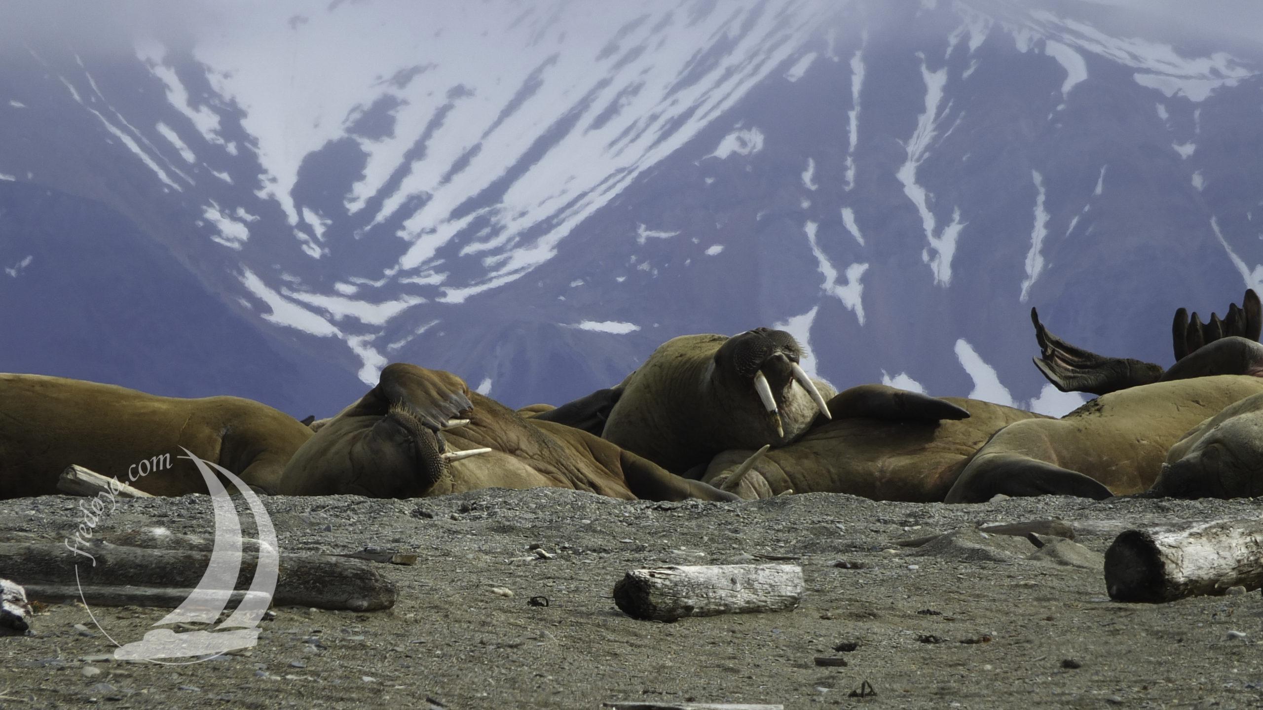 Svalbard, Spitzberg