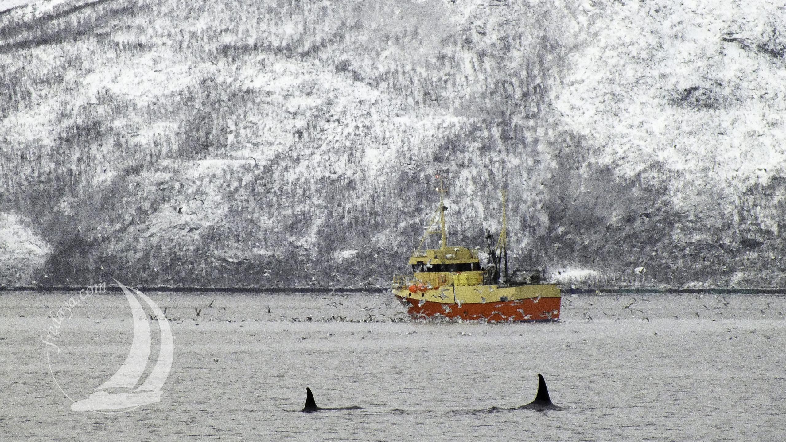 Norway - Kaldfjord - 2014